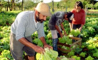 La presente ley establece un Régimen de Protección y Fomento de los Sistemas Socio-productivos de la Agricultura Familiar.