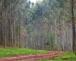 bosque-960