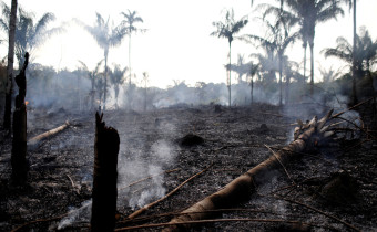 A charred trunk is seen on a tract of Amazon jungle that was recently burned by loggers and farmers in Iranduba, Amazonas state, Brazil August 20, 2019. REUTERS/Bruno Kelly